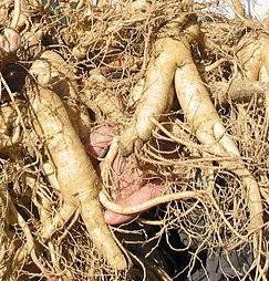 Sexual Benefits of Ginseng